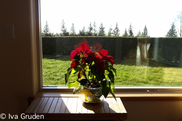 cypress mountain_iva_gruden-2